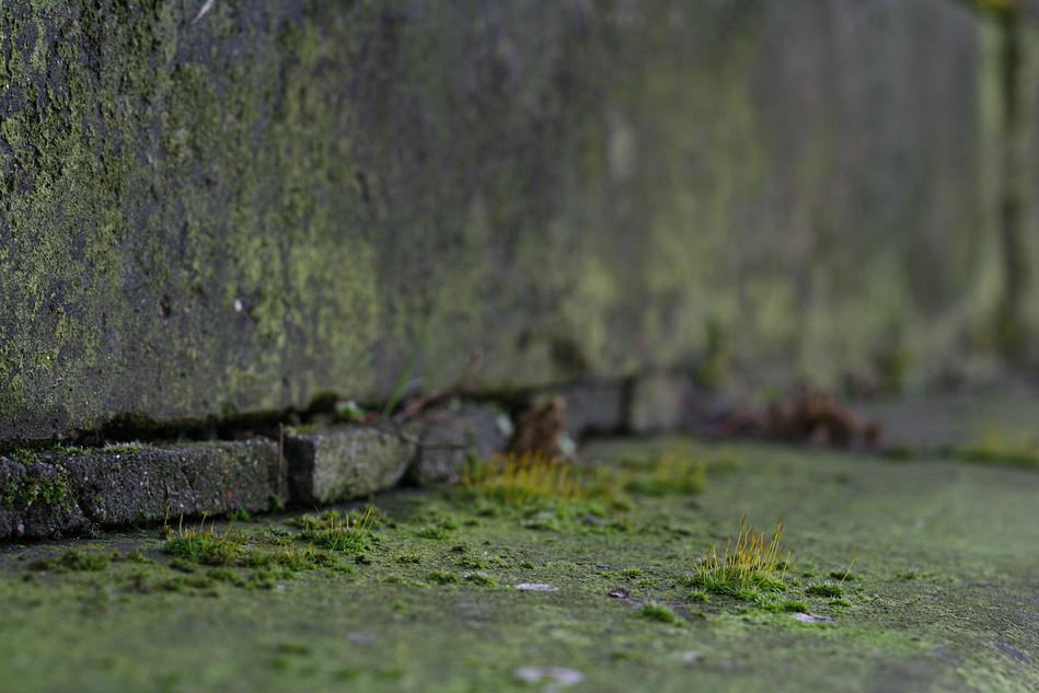 Moos auf Mauervorsprung