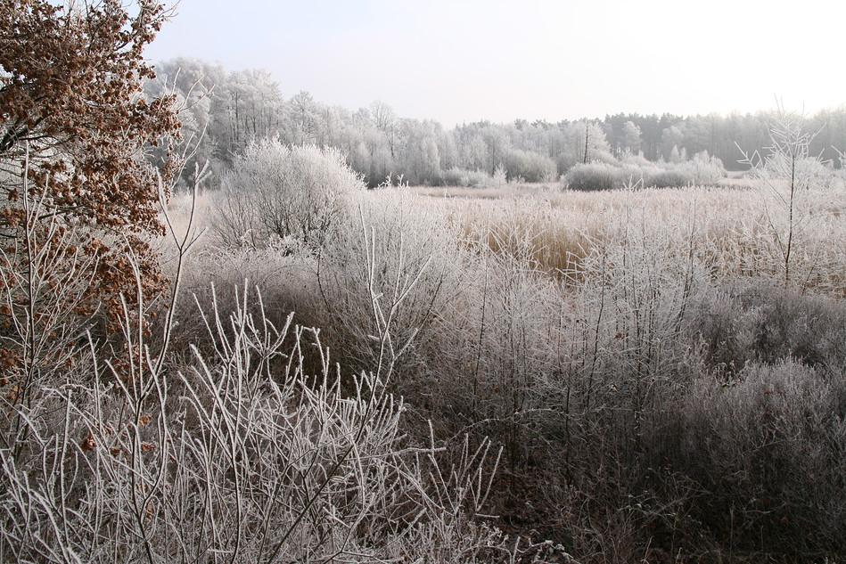 Winterliches Raakmoor