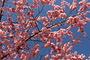 Vorschau von: Blütendecke