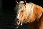Vorschau von: Pferd