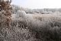 Vorschau von: Winterliches Raakmoor