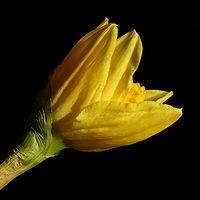Ausschnitt von: Blumenportrait