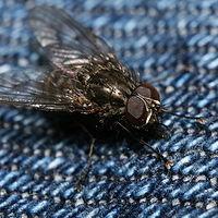 Ausschnitt von: Fliege