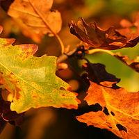 Ausschnitt von: Goldener Oktober