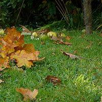 Ausschnitt von: Herbststimmung
