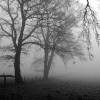 Ausschnitt von: Nebel