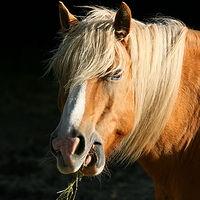 Ausschnitt von: Pferd