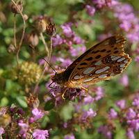 Ausschnitt von: Schmetterling