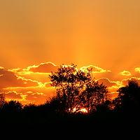 Ausschnitt von: Sonnenuntergang
