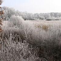 Ausschnitt von: Winterliches Raakmoor